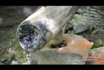 Primitive Technology: Water powered hammer